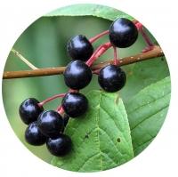 Черемуха сушеная (плод) 200 гр.